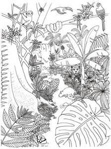 rainforest coloring pages rainforest coloring page rainforest alliance