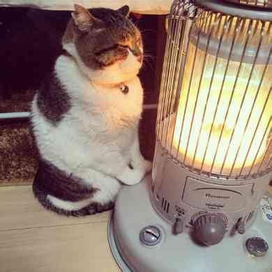 Kaos Fangkeh Lover Cat V Ii ストーブで暖を取る猫の ぶさお くん かわいいポーズと幸せそうな表情でこちらの心までぬくぬくに ガールズちゃんねる channel