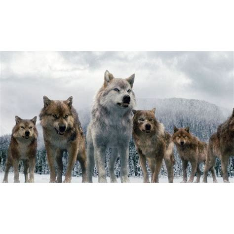 Saga Of The Wolf 55 best jacob the wolf pack images on