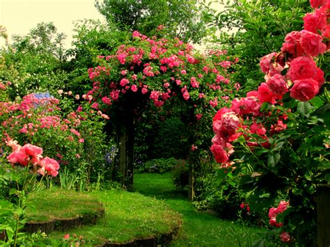 flower in the garden rose flower garden flower hd wallpapers images