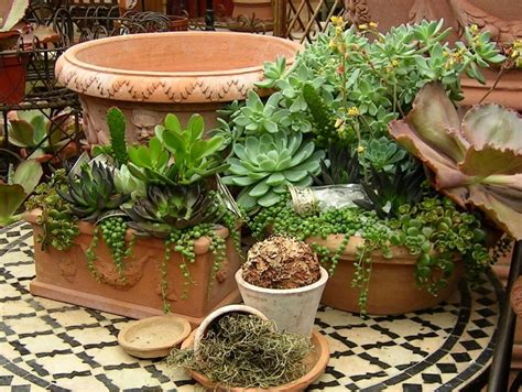 succulent planter succulent planter to make awesome indoor garden homesfeed