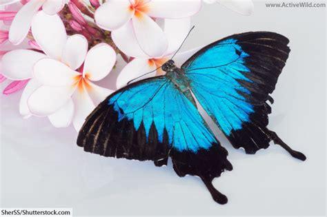 animals that start with u list of amazing animals animals that start with u list of amazing animals