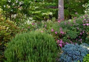 ten favorite plants for foliage deb s garden deb s garden blog