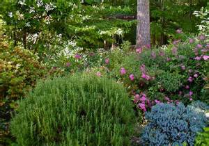ten favorite plants for foliage deb s garden deb s