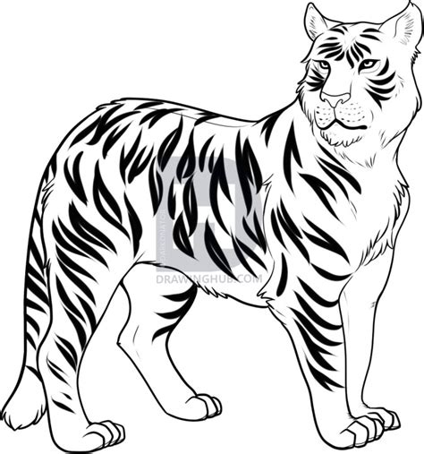 How To Draw A Liger Liger Step By Step Forest Animals Liger Coloring Pages
