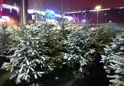 christmas tree markets officially open in bucharest