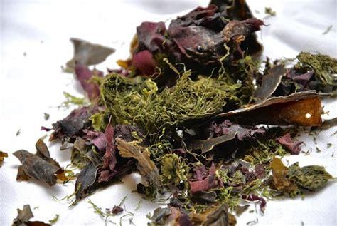 cuisiner algues recette bio du caviar d algues 224 l ap 233 ritif