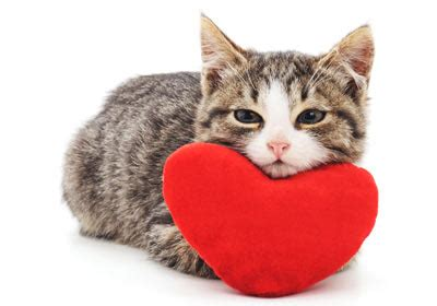 8 Ways Your Cat Shows It You by Ways Your Cat Shows You Slideshow