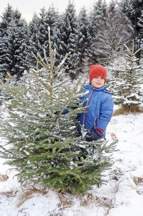 top 28 weihnachtsbaum selber schlagen ruhrgebiet im