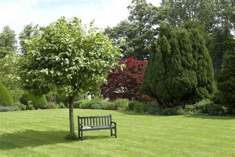 alberi per giardini piccoli alberi ornamentali alberi alberi per ornamento