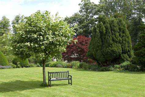 alberi ornamentali per giardino alberi ornamentali alberi alberi per ornamento