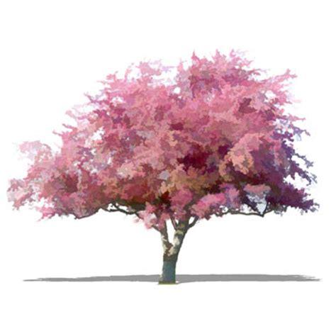cherry blossom tree 3d model free npr deciduous 06 3d model formfonts 3d models textures