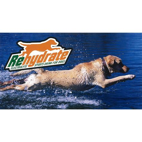 electrolytes for dogs rehydrate 174 electrolyte sports drink for dogs 163586 pet accessories