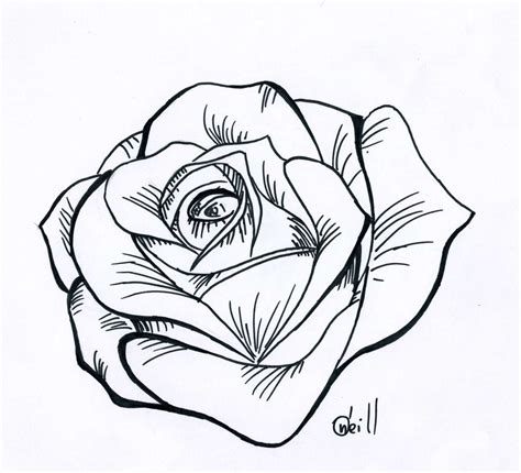 drawing pattern of rose traditional rose line drawing line drawing rose cliparts