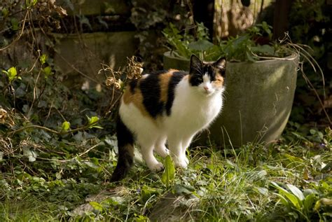 bed bygs how to keep cats out of flower bed 75 how to keep cats out of your garden if you have