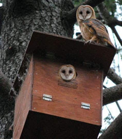 how to make an owl box i can totally make that wishlist wednesday an owl box