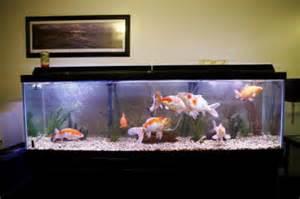 tank de la freshwater aquarium fish tanks tropical fish tank ideas