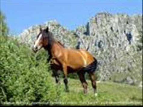 sciogli le trecce i cavalli testo pupo su di noi con testo doovi