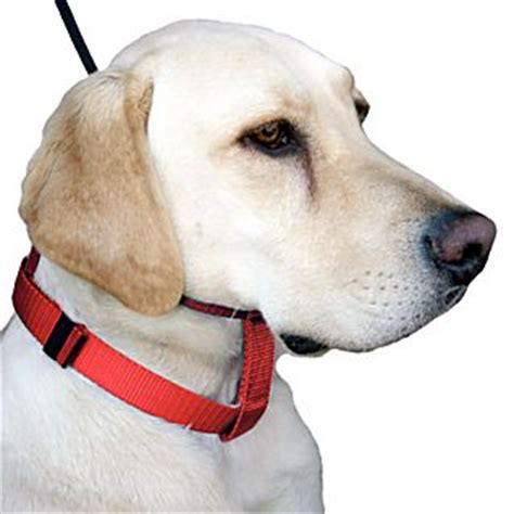 cesar millan collar cesar millan s illusion collar and leash set national geographic store