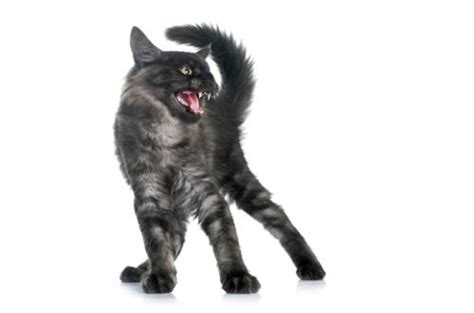 aggression towards causes of cat aggression towards humans