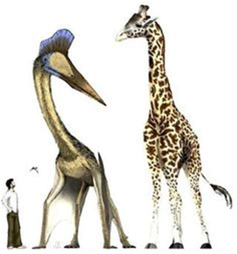 quetzalcoatlus wikipedia the free encyclopedia 1000 images about quetzalcoatlus on pinterest dinosaurs