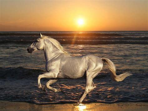 white horse galloping beach sea waves sunset desktop