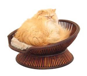 cat beds bamboo cat bed pets trends