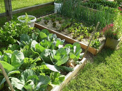 create  raised bed vegetable garden  poetic