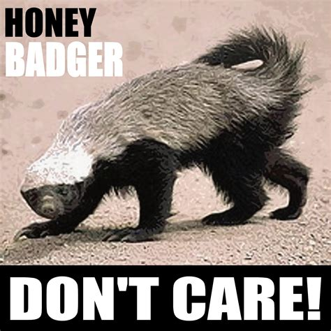 Honey Badger Don T Care Meme - honey badger don t care poster love it pinterest