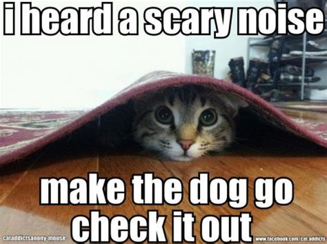 Scared Memes - scaredy cat meme www pixshark com images galleries
