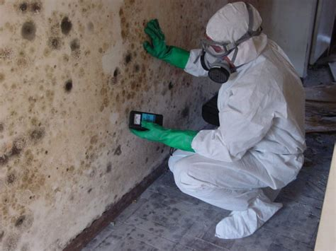 mold remediation mold removal 815 322 1100