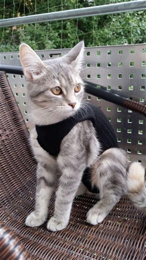 wann sollte katzen kastrieren lassen katze mit 4 5 monaten kastrieren lassen katzen forum