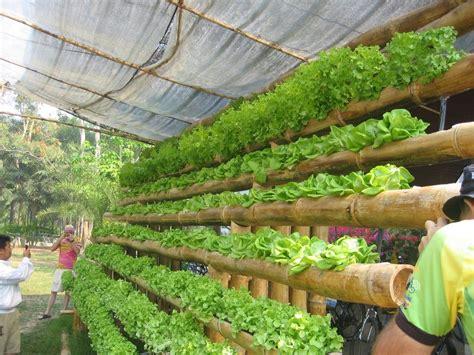 panoramio photo  hydroponics home kit maejo small