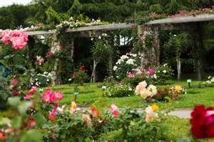 different types of gardens different types of roses garden heirloom single and