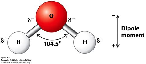 diagram of water molecule introduction to the principles o