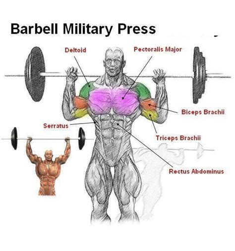 barbell press shoulder exercises