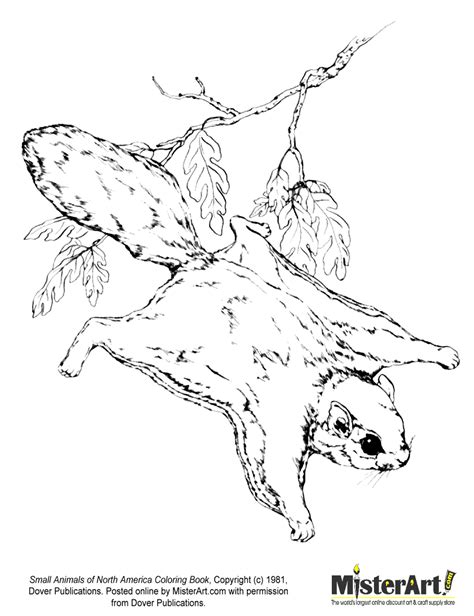north american animals coloring page flying squirrel coloring pages download and print for free