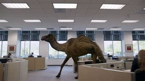 geico hump day camel commercial happier than a youtube you girl videos and its hump day on pinterest