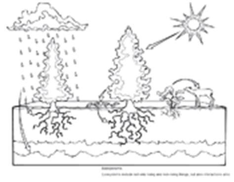 biology coloring pages worksheets asu ask a biologist