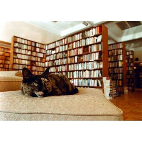 the dusty bookshelf events and concerts in manhattan the