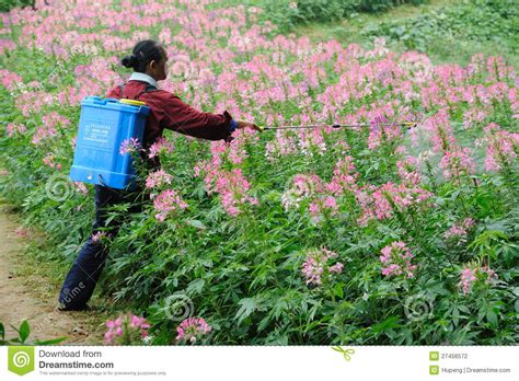 chinese worker spraying pesticides editorial photography
