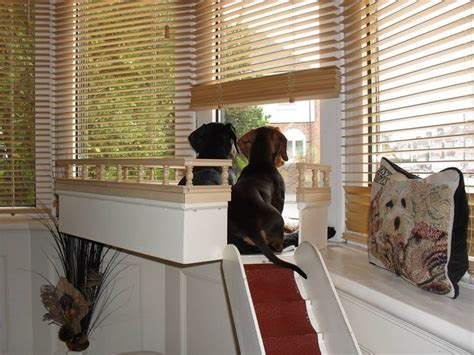 dog bench for window 1000 ideas about cat window perch on pinterest cat