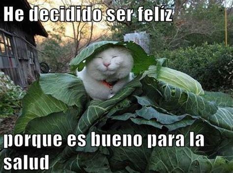 Funny Spanish Meme - cat memes in spanish
