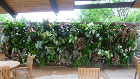 tropical plants chicago 17 best images about easy vertical displays on