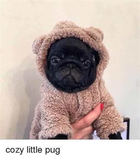 pug cozy 25 best memes about pugs pugs memes