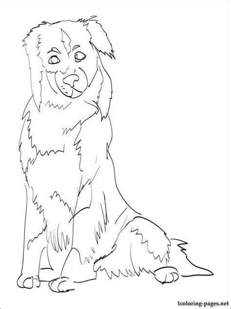 australian shepherd coloring page coloring pages