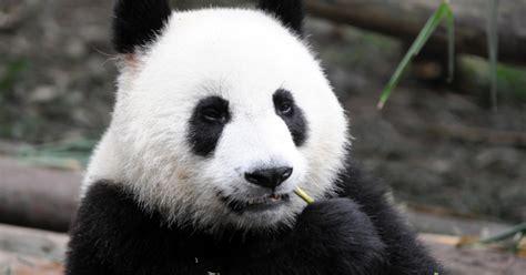 Olay Untuk Mata Panda sayonara mata panda dengan 12 trik sederhana ini kawaii
