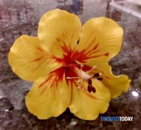 corsi fiori corso fiori l ibiscus eventi a treviso