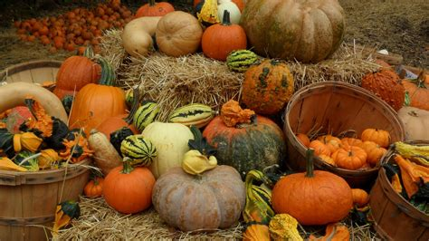 pumpkin patches 1000 images about grrrrreat pumpkins on