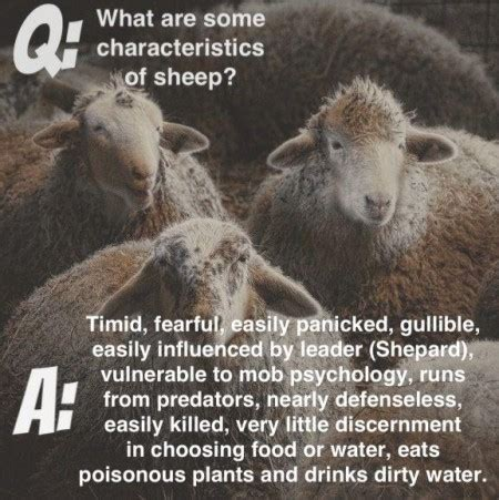 Anti Sheep Mentality by The Herd Mentality Of Sheeple Acidrayn